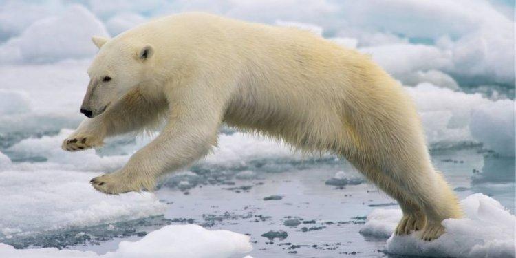 Sergey Ananov: Two days on ice