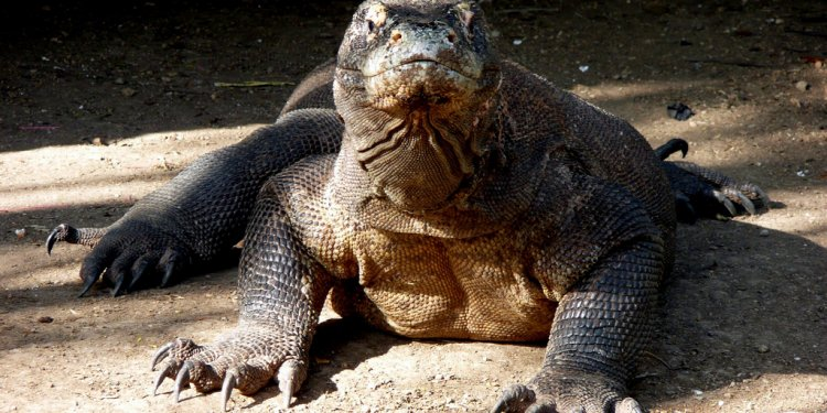 Komodo Island Facts