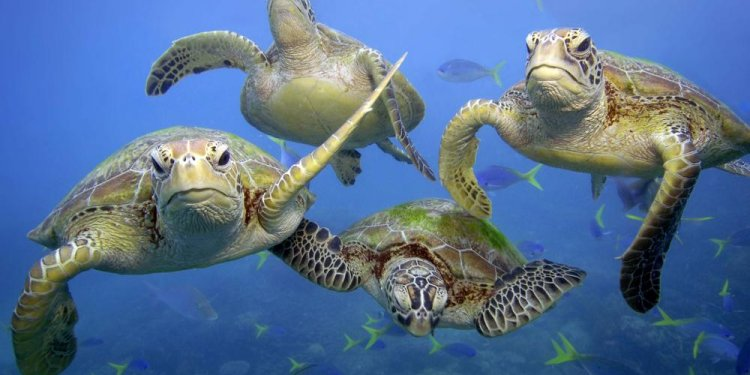 Great Barrier Reef Endangered Animals