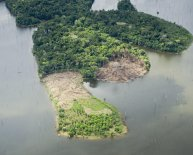 Amazon rainforest natural resources